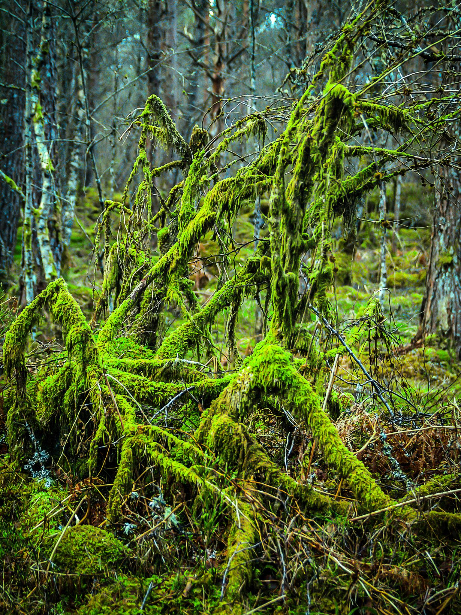 mossy by Thore's photo
