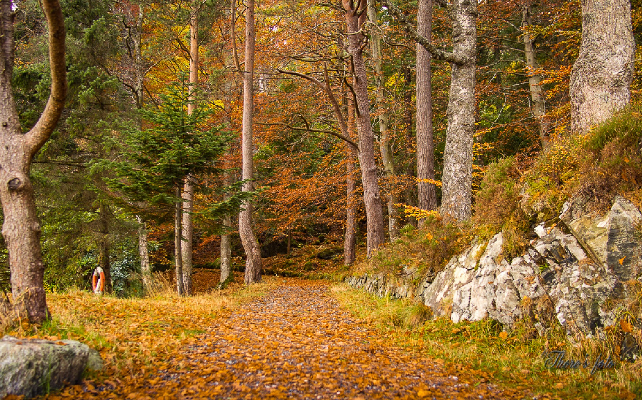 forest trail by Thore's photo