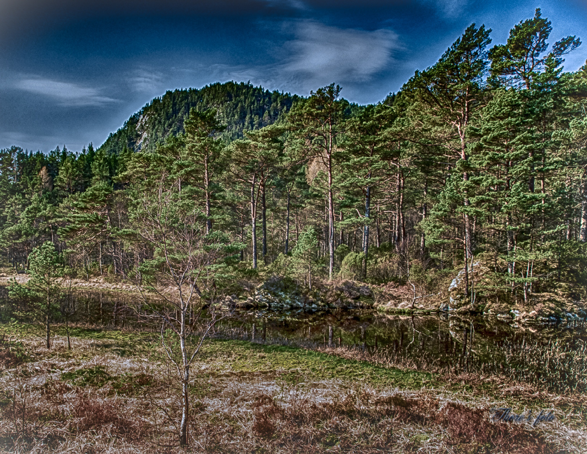 Forest by Thore's photo