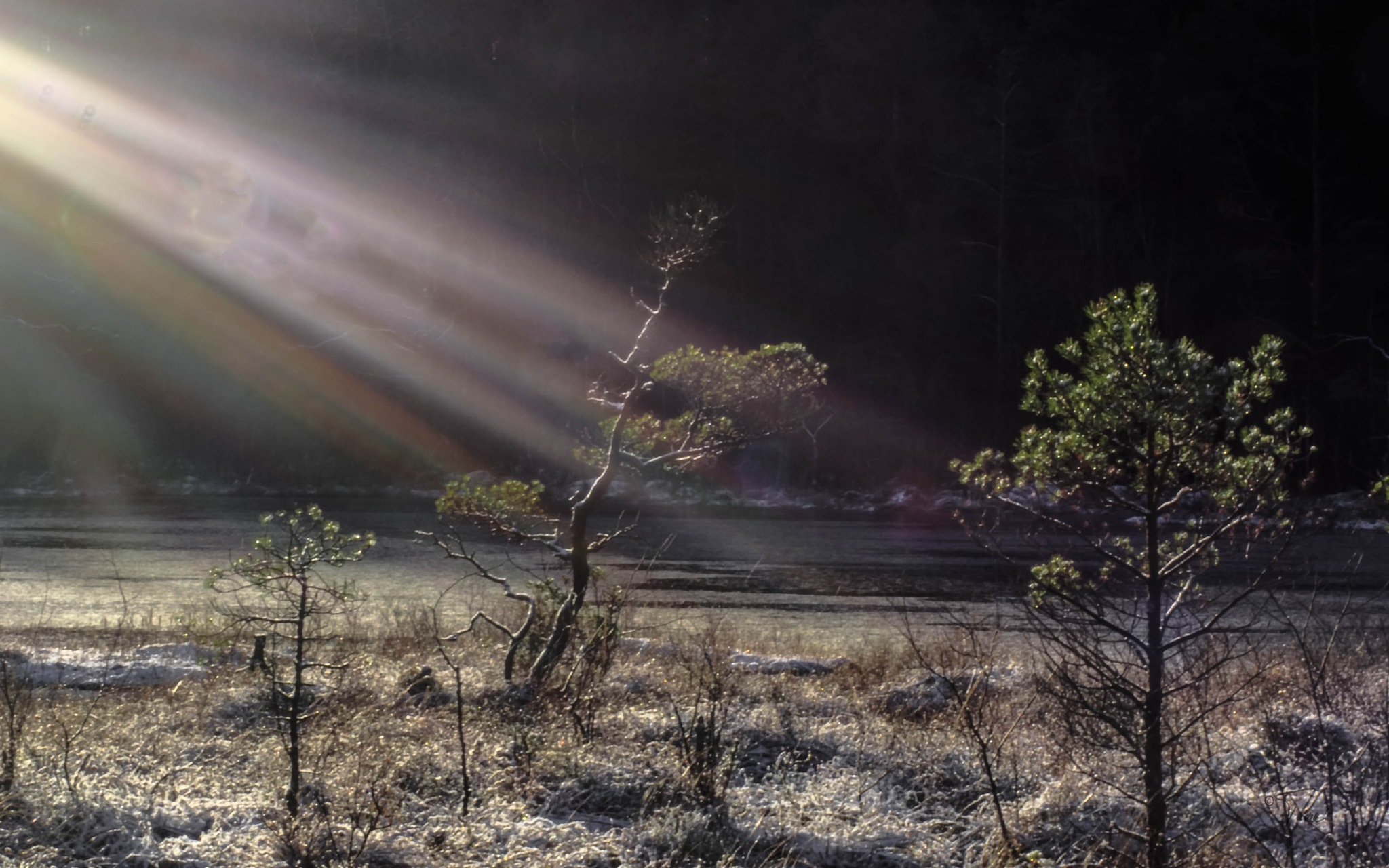 Morning sunbeams by Thore's photo