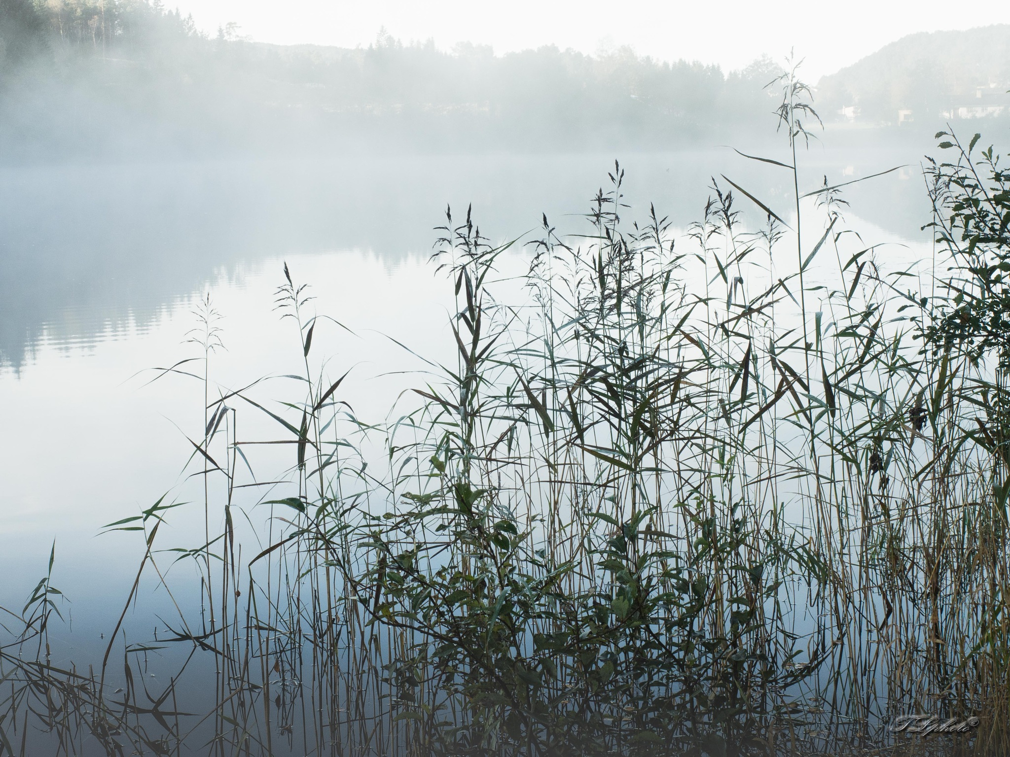 Reed in haze II by Thore's photo