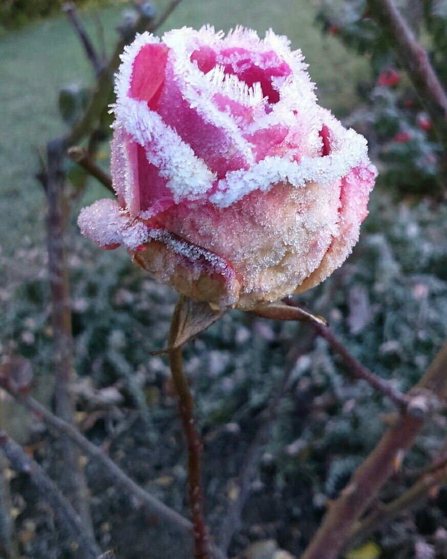 frost cold morning - just delightful  by sallyannegriff