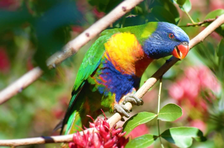 beautiful bird by sallyannegriff