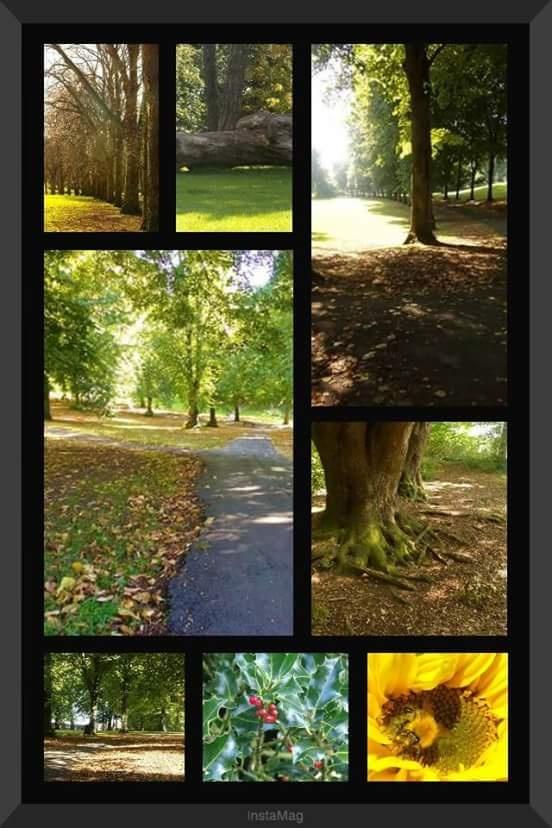The Park ~ Ashcombe in Weston-super-mare  by sallyannegriff