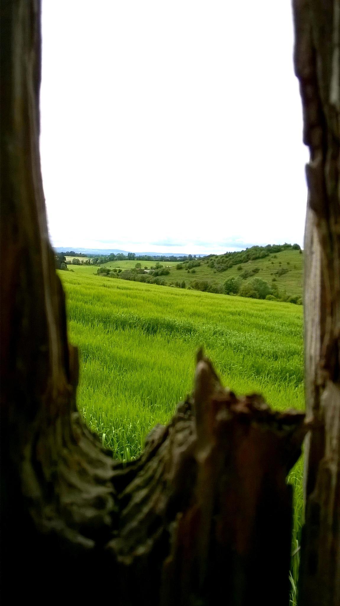 Fields of Barley by Eugene Brennan