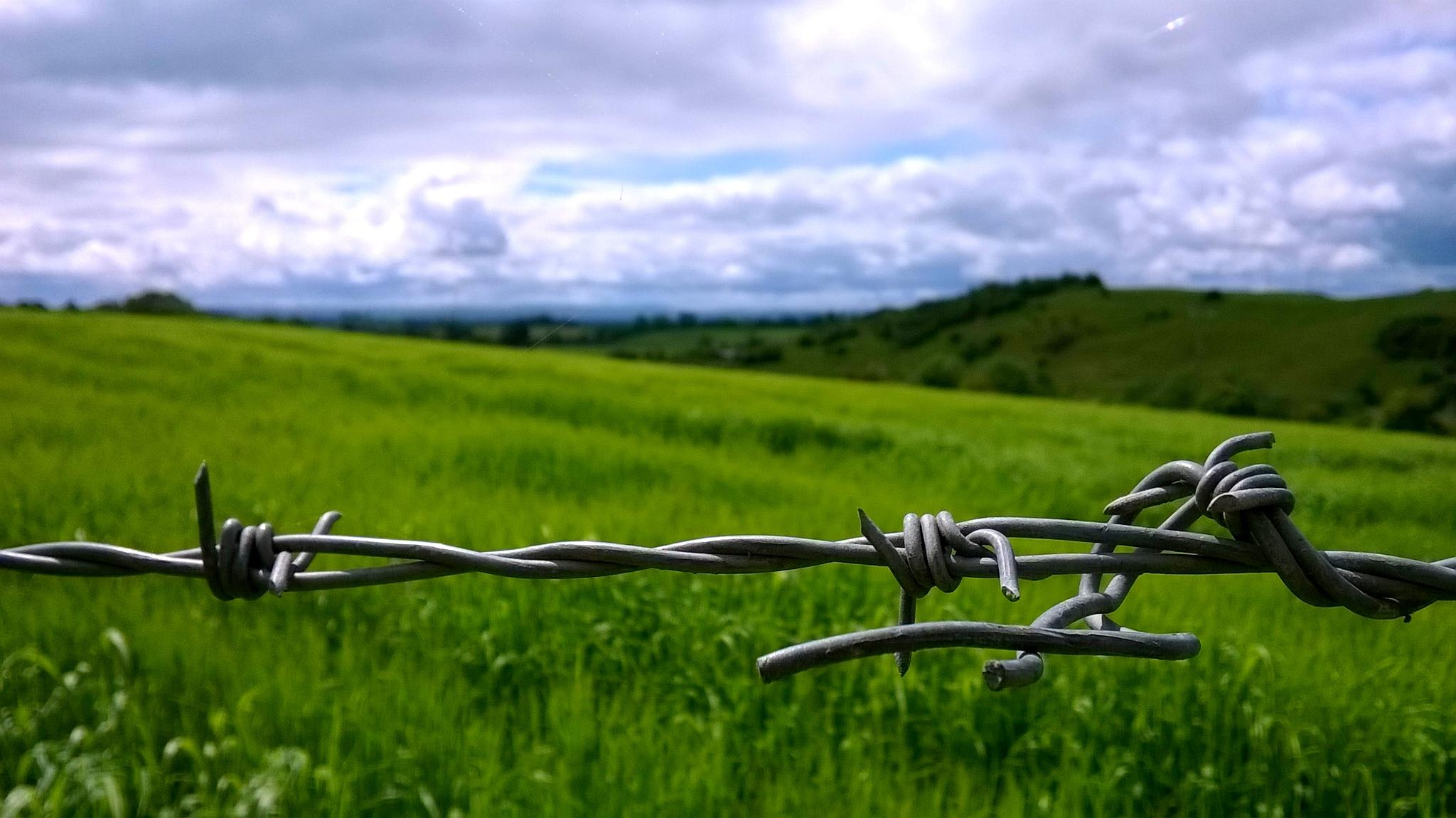 Barbed Wire by Eugene Brennan