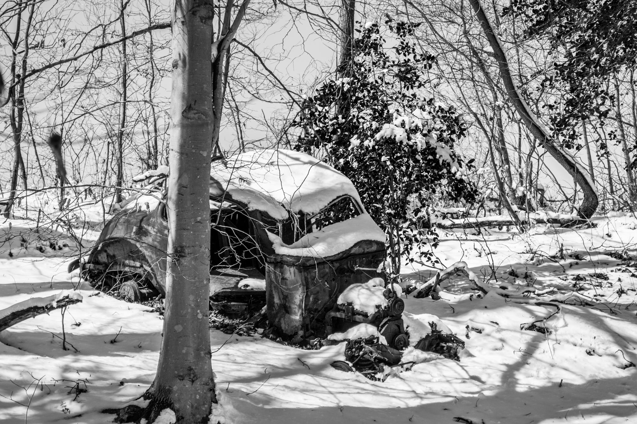Car in woods by Dream Crazy Studios