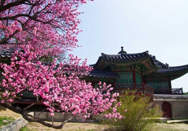 Hidden Treasure of Korea  by Kim's Travel