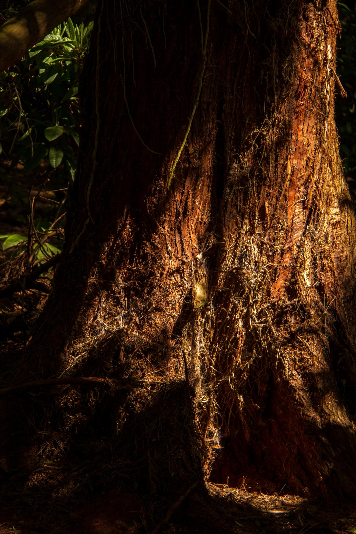 The dark dark woods by astroclan2