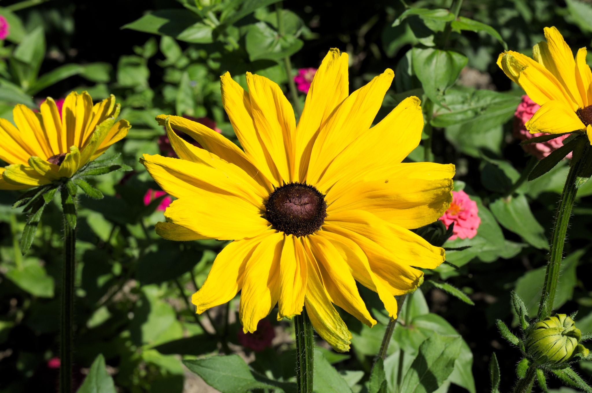 Sunny flower by Anatoliy Ashmyanskiy