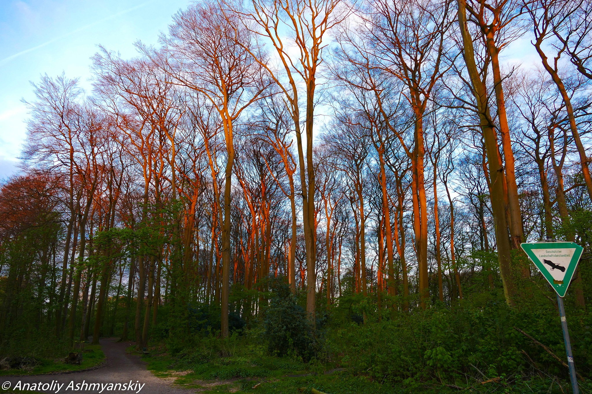 Photo in Random #forest #sunset