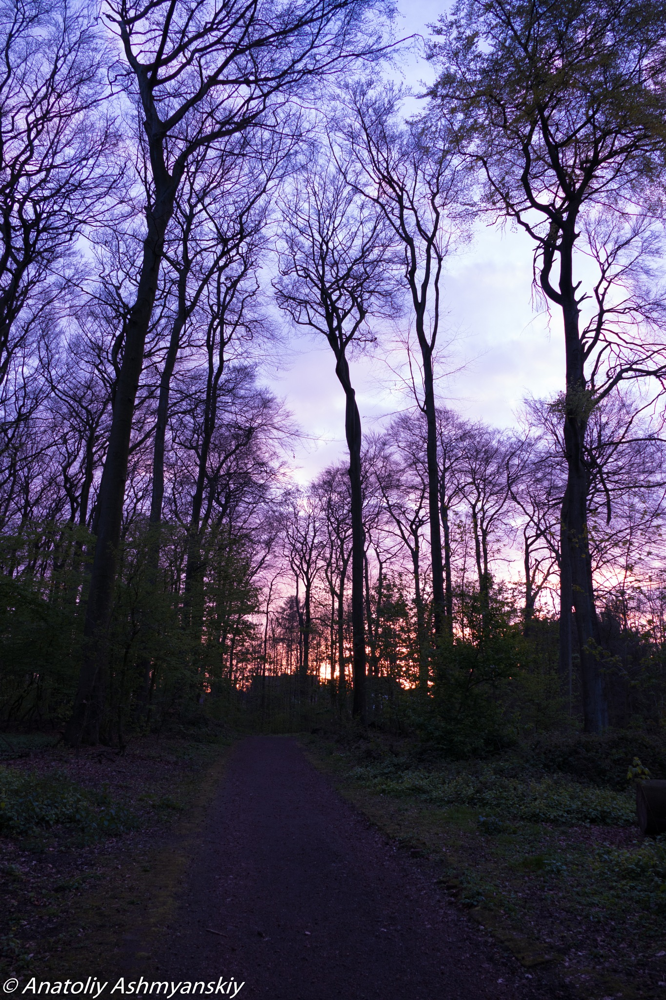 Photo in Random #sunset #forest