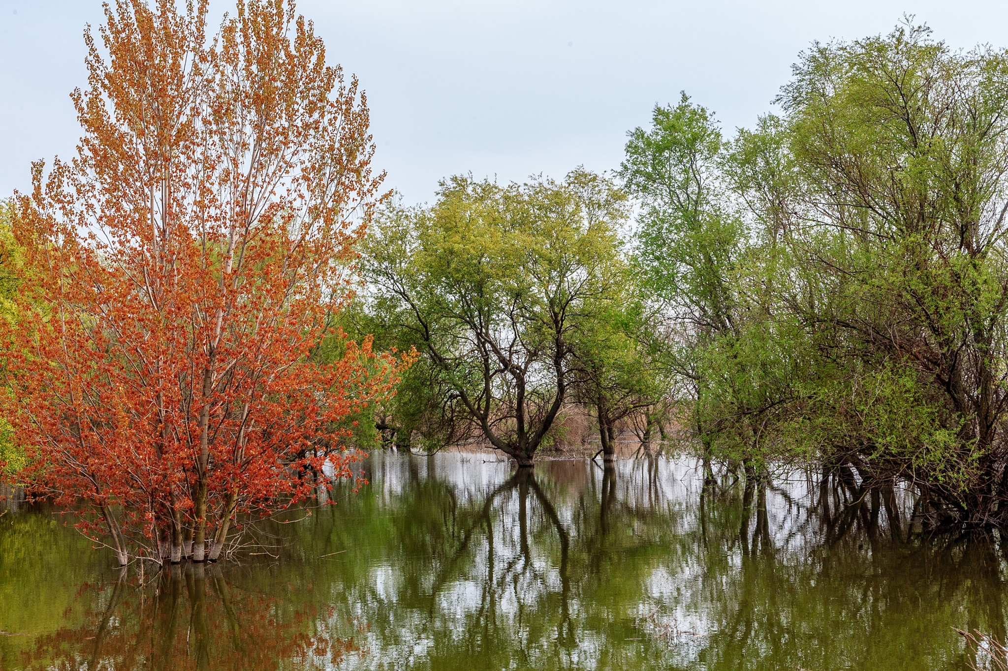 Trees in the lake by cenk sarvan