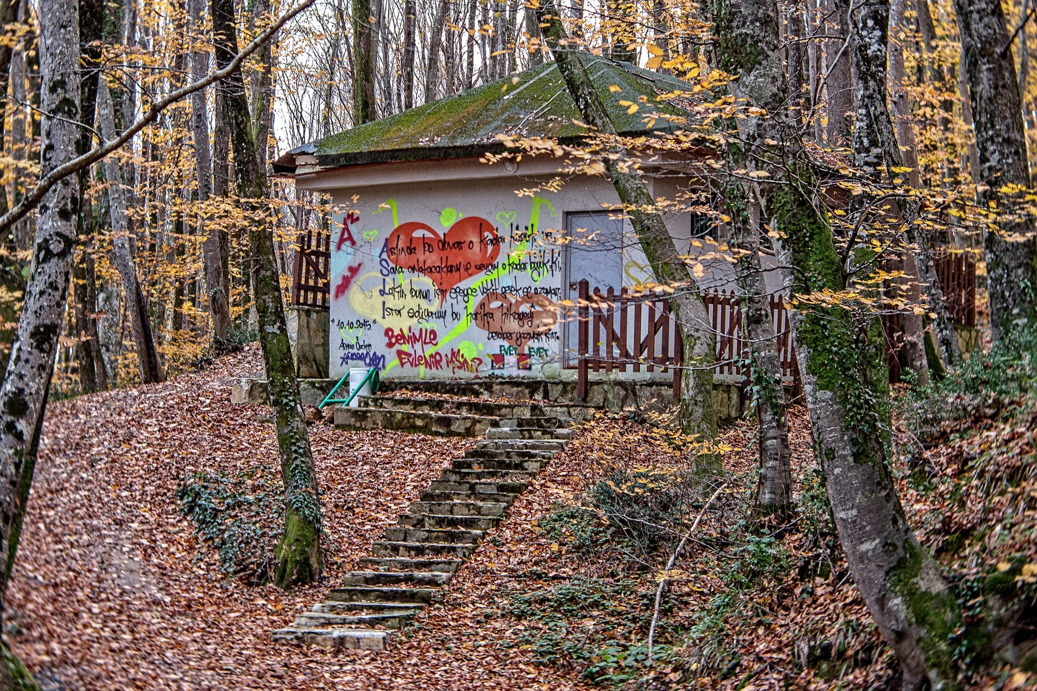 Graffiti in the forest by cenk sarvan
