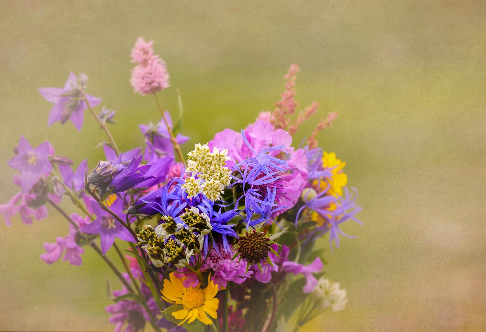 Flowers by cenk sarvan