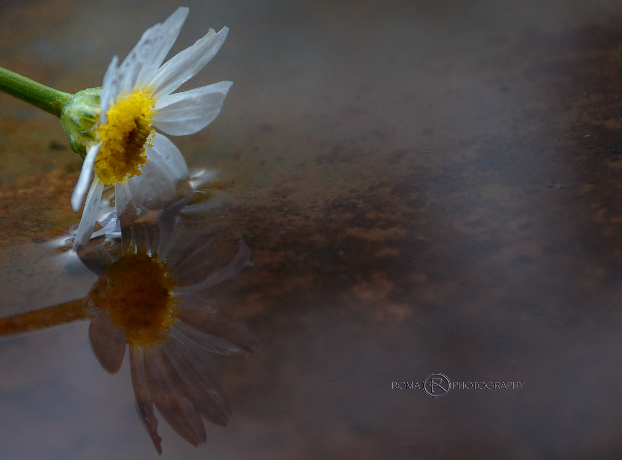 reflection by Roma Photography