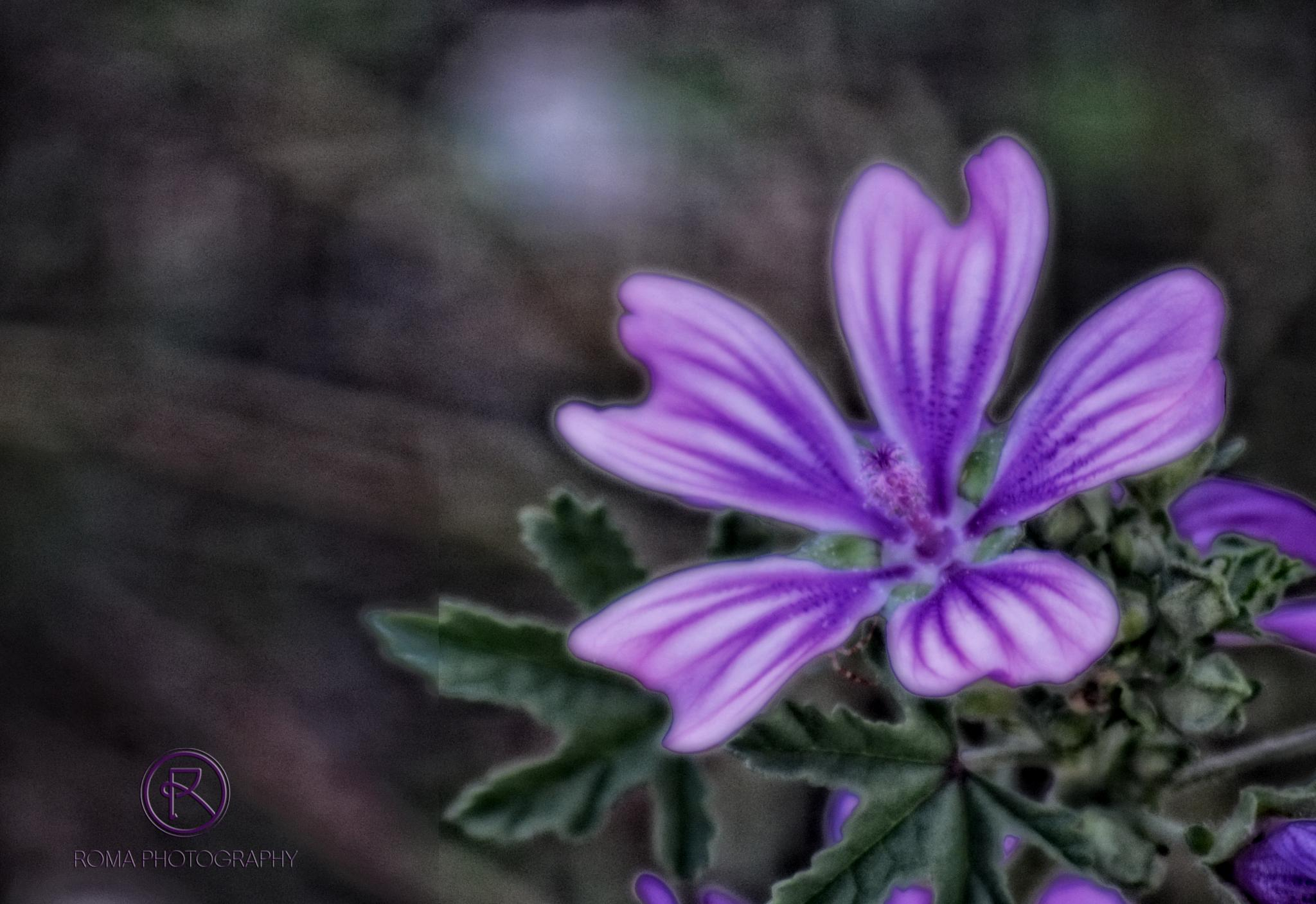 purple dream by Roma Photography
