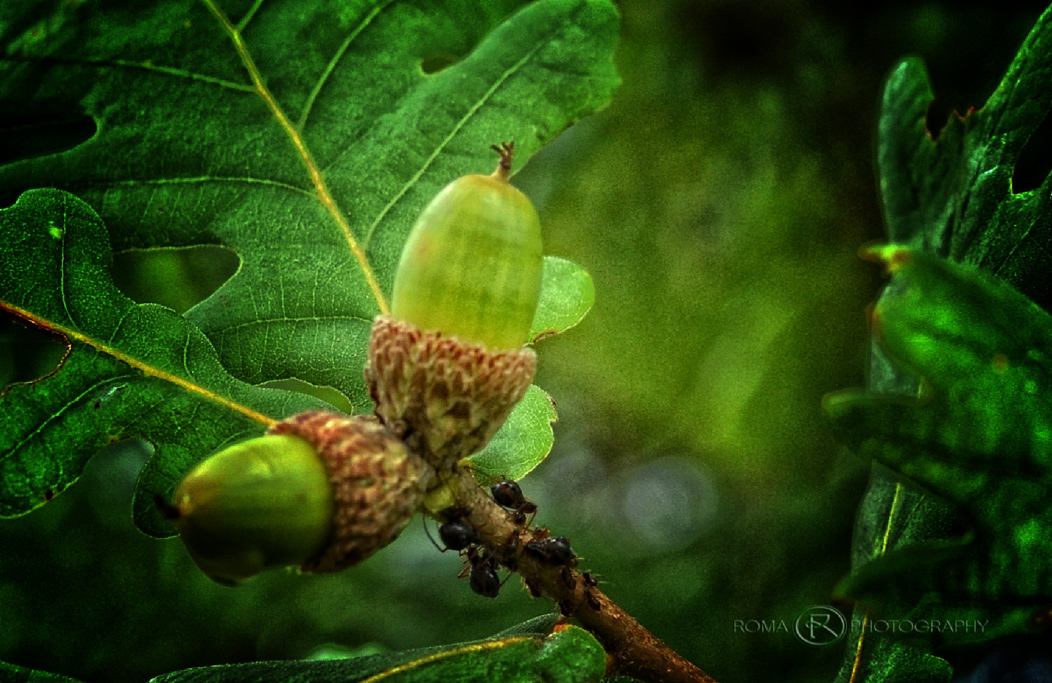 fruits of the forest by Roma Photography