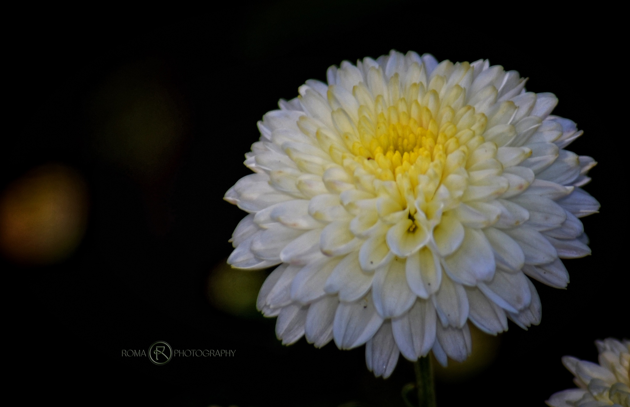 one white 2 by Roma Photography