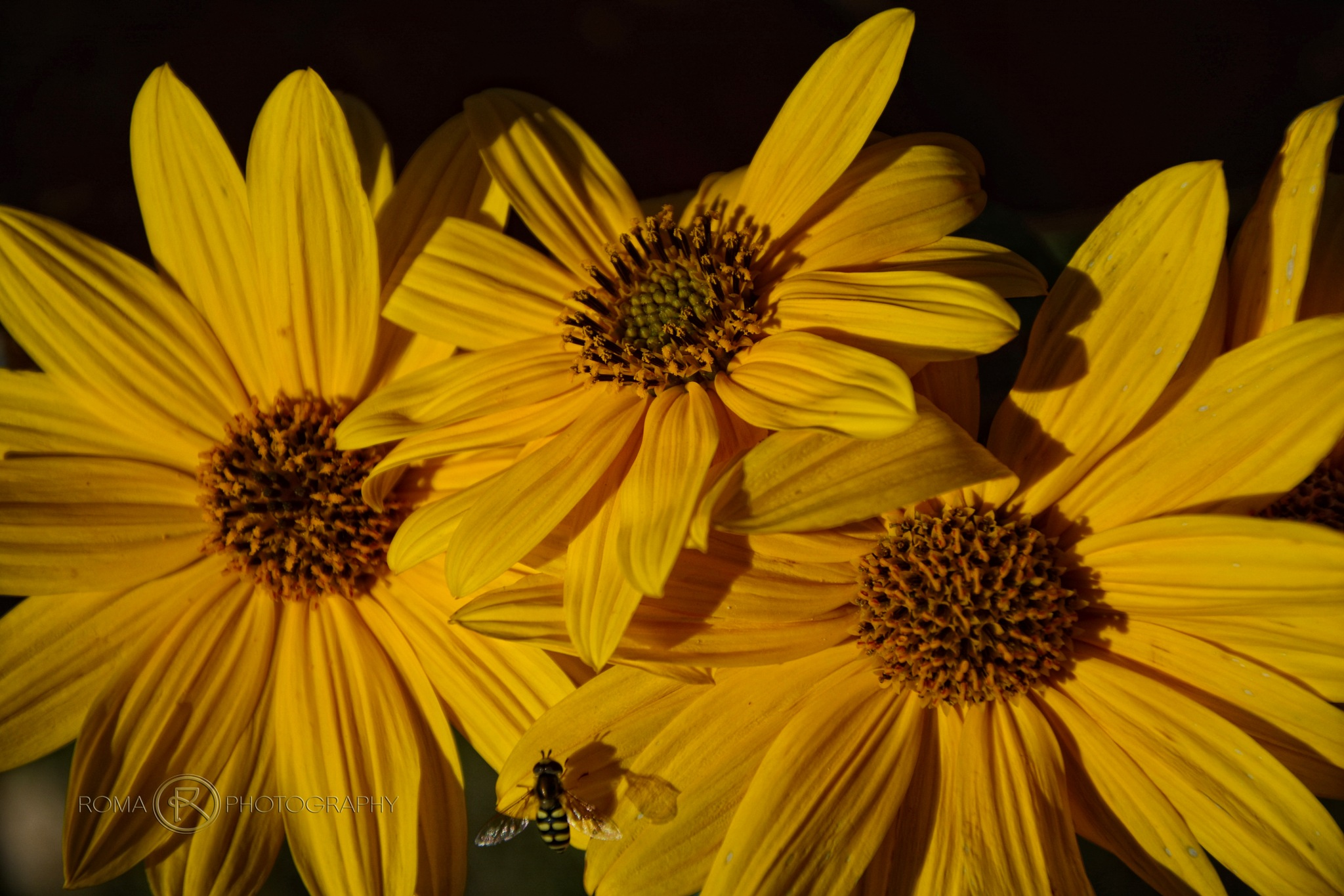 yellow 4 by Roma Photography