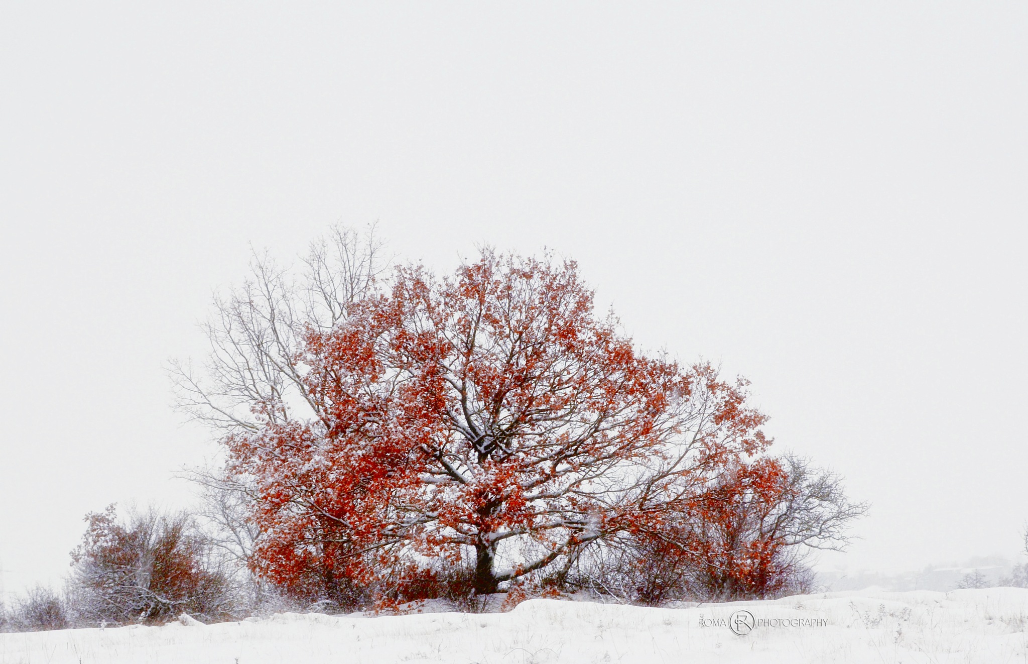 winter 9 by Roma Photography
