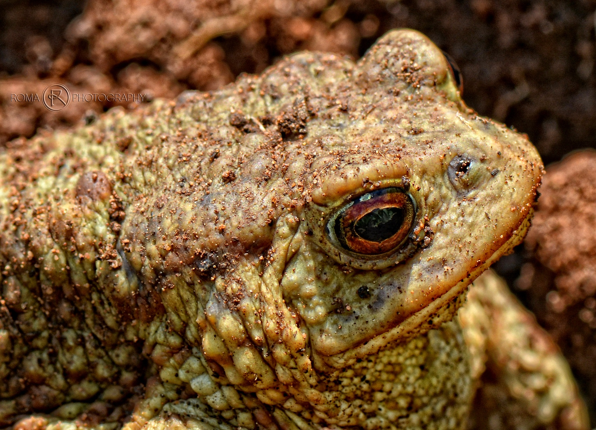 Mr. Frog by Roma Photography