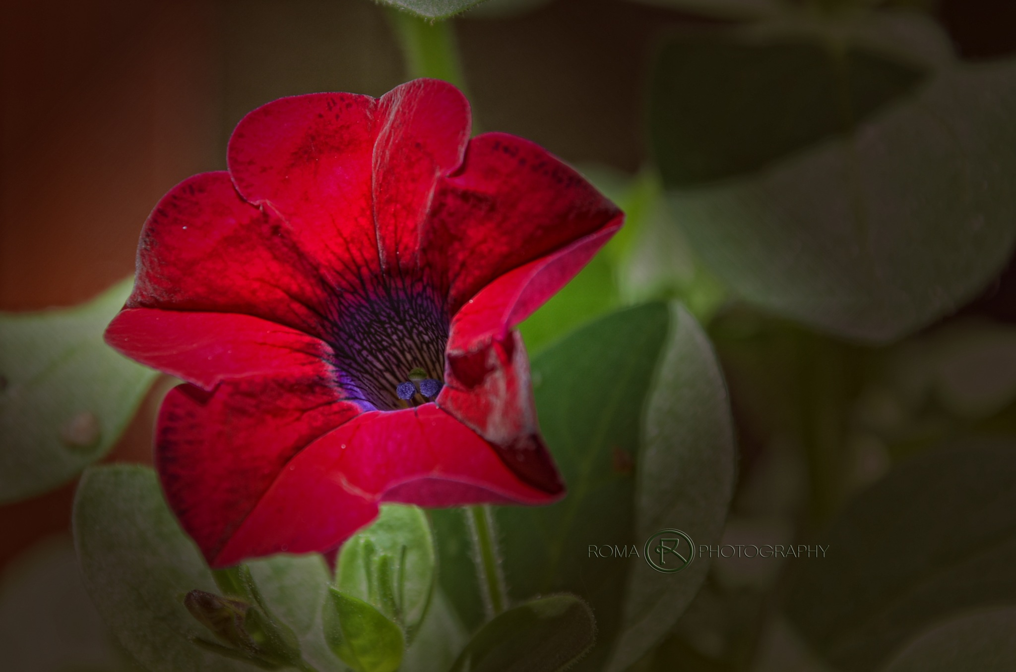 red by Roma Photography