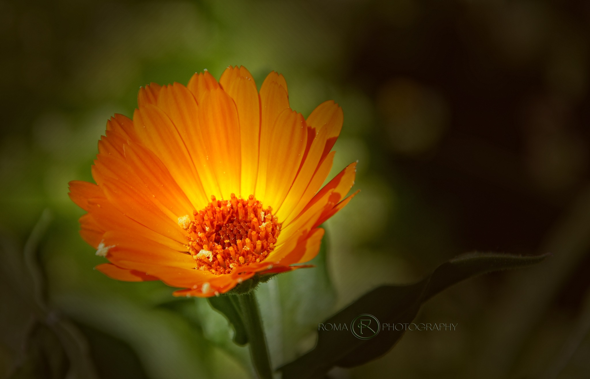small by Roma Photography