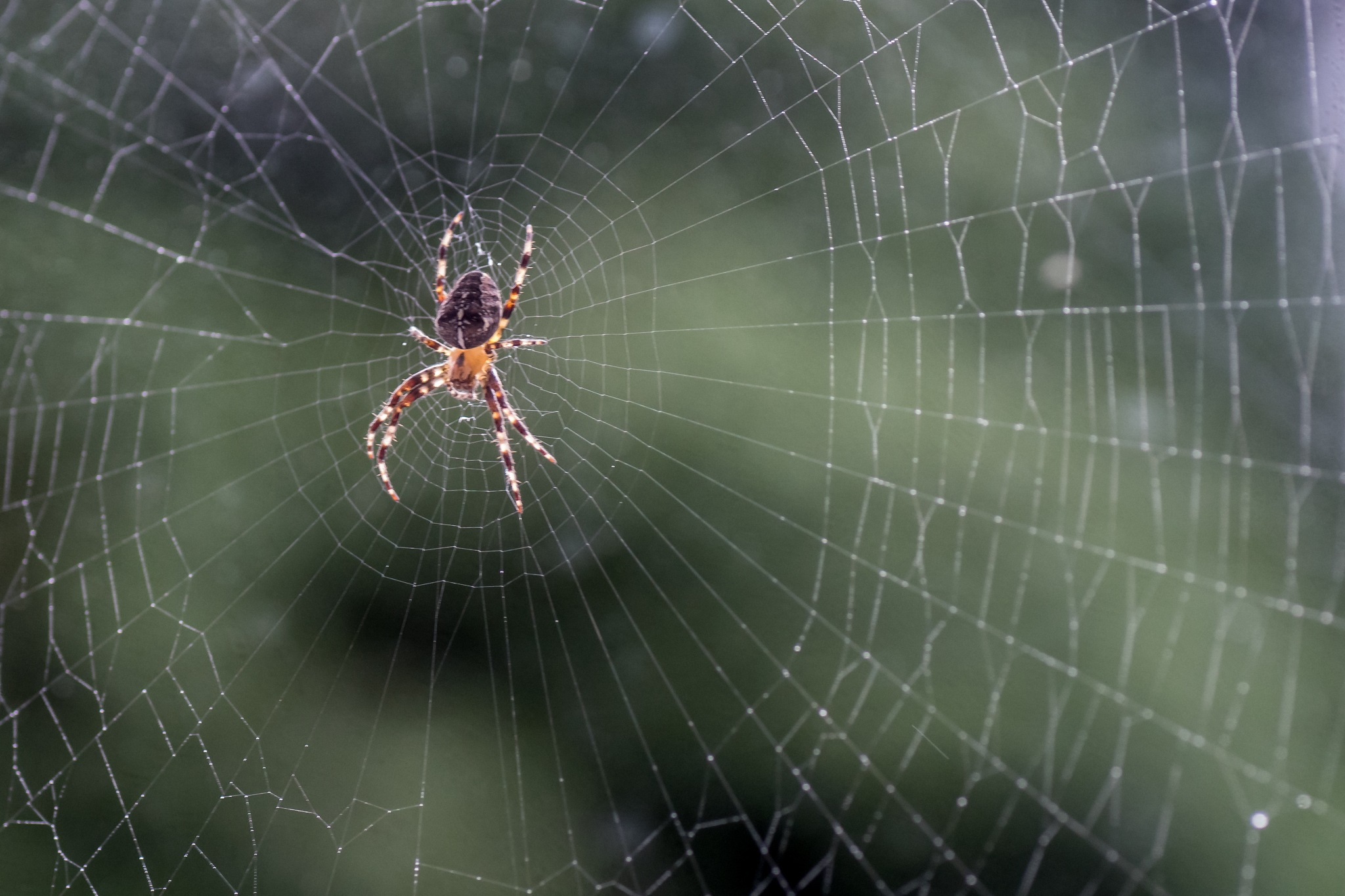 Incey Wincey Spider by mg1631