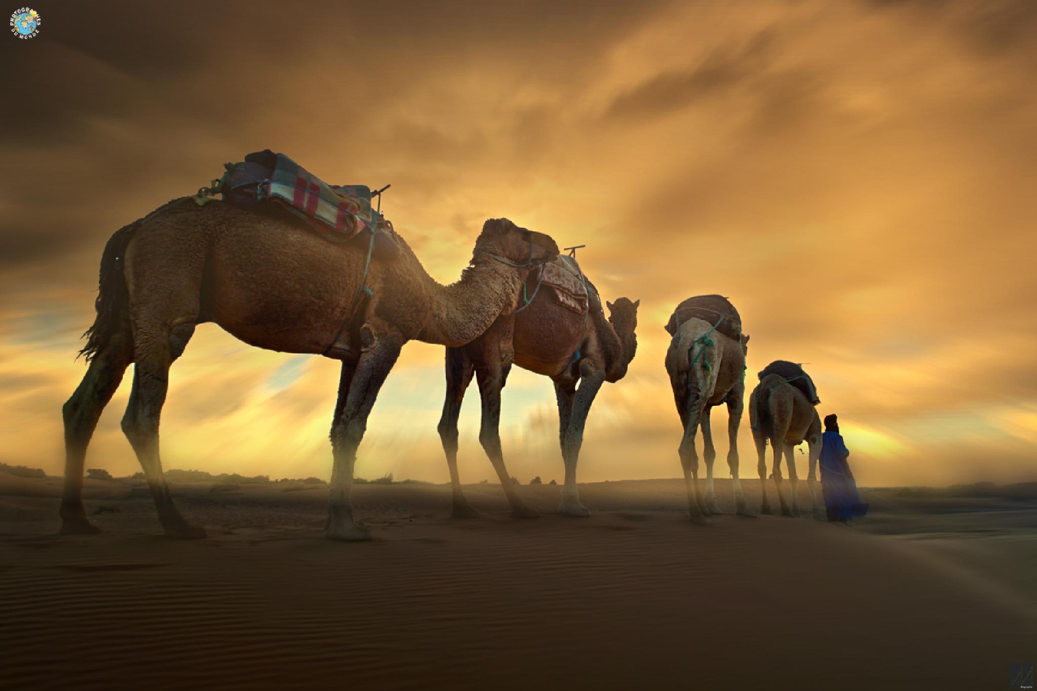 Merzouga / Hypnotic Desert / Episode II by Moussa Idrissi-MOGRAPHE