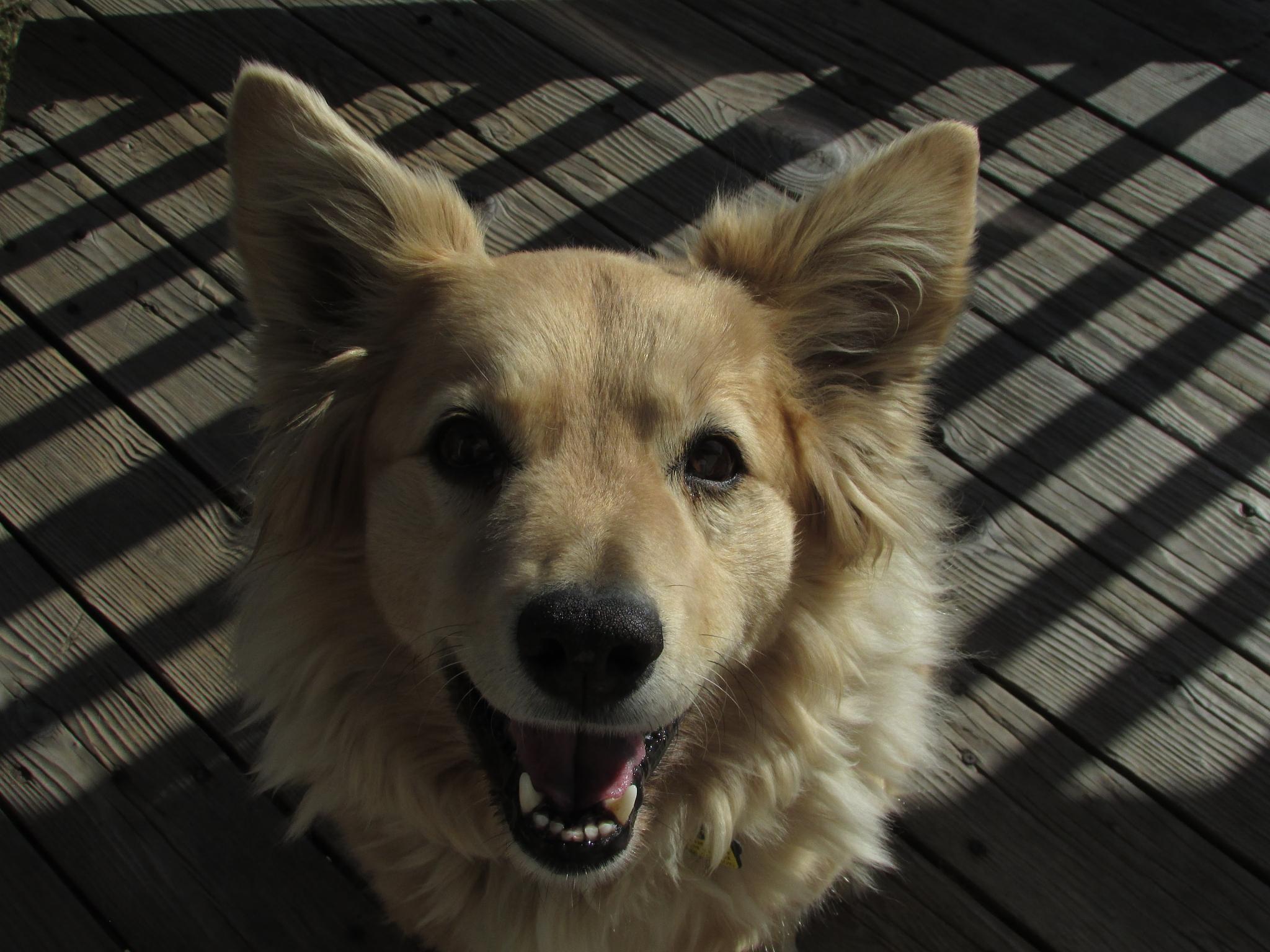 Happy Dog by scrane0521