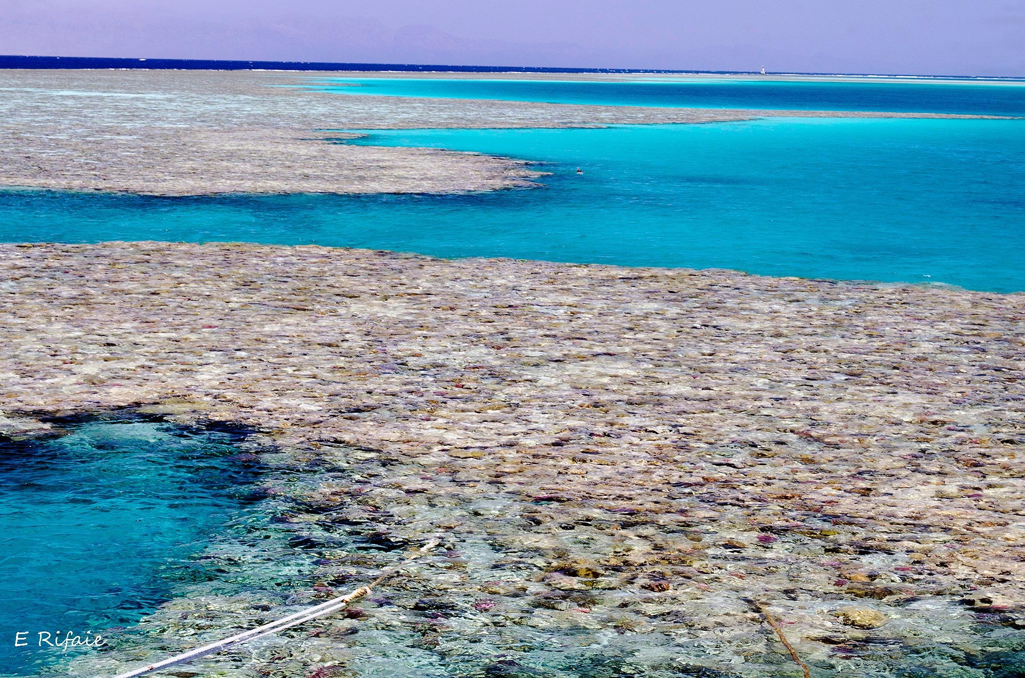 Coral reefs in the Red Sea by Emad Eldin Moustafa El Refaie