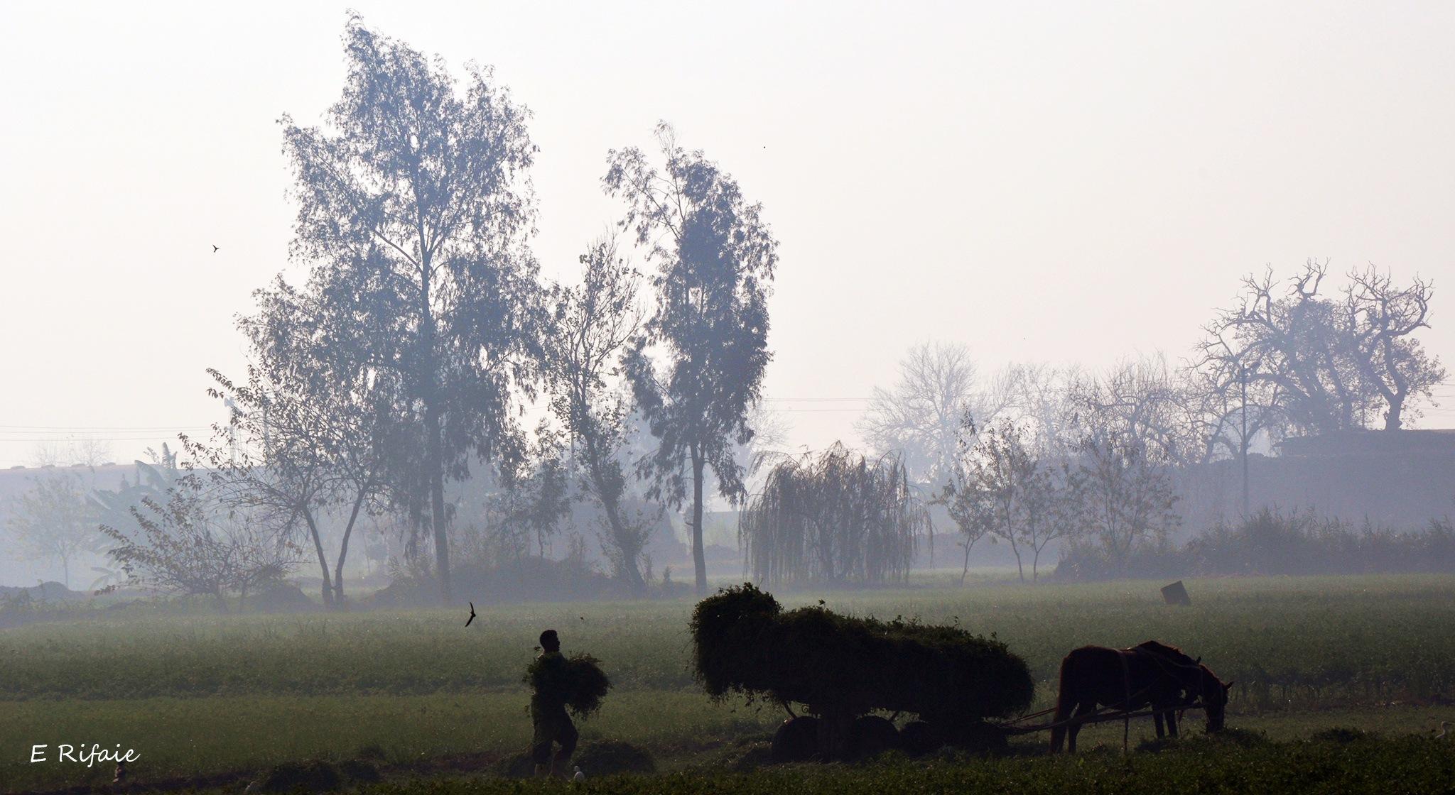 Countryside morning by Emad Eldin Moustafa El Refaie