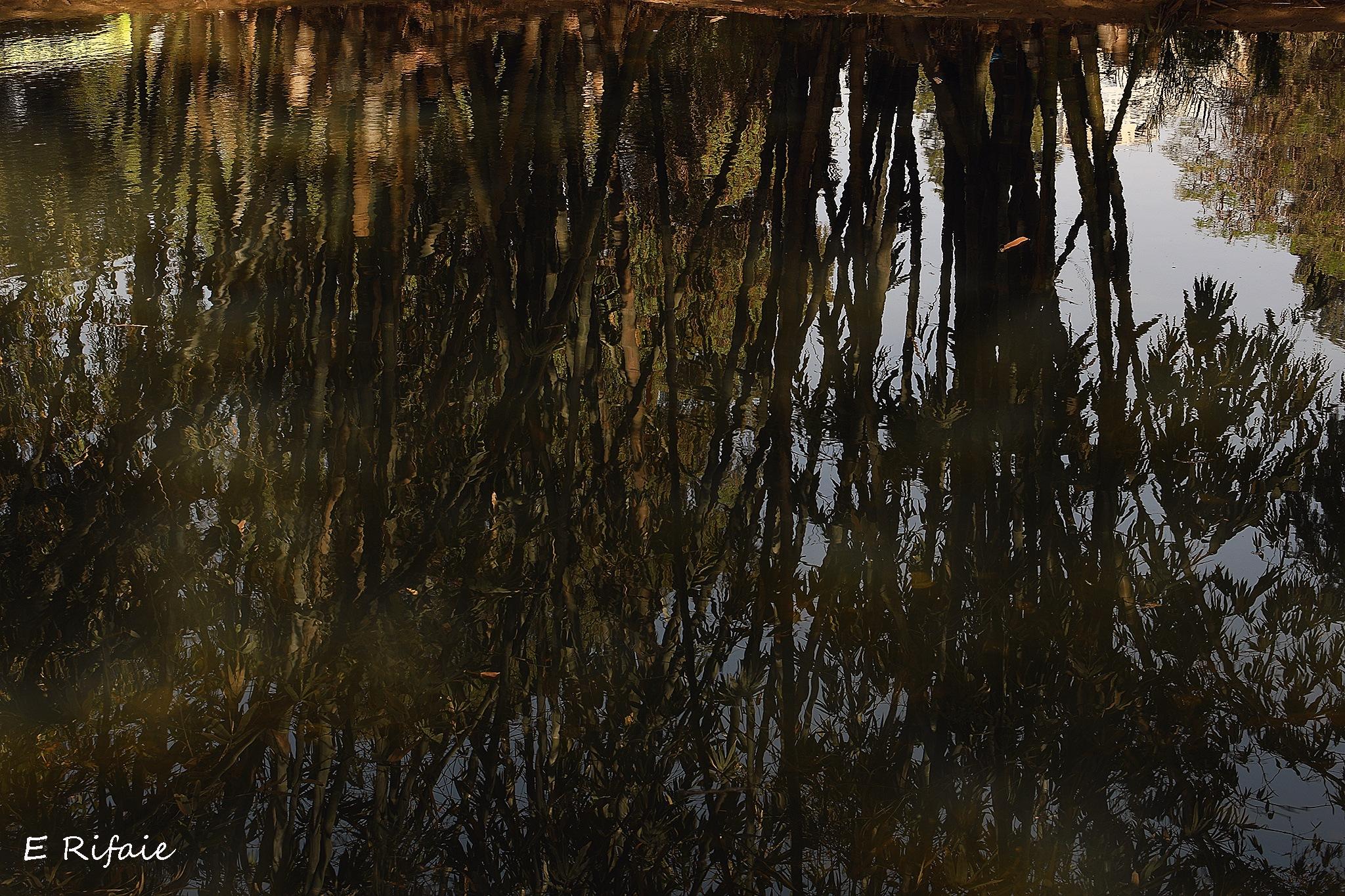 Bambo reflection by Emad Eldin Moustafa El Refaie