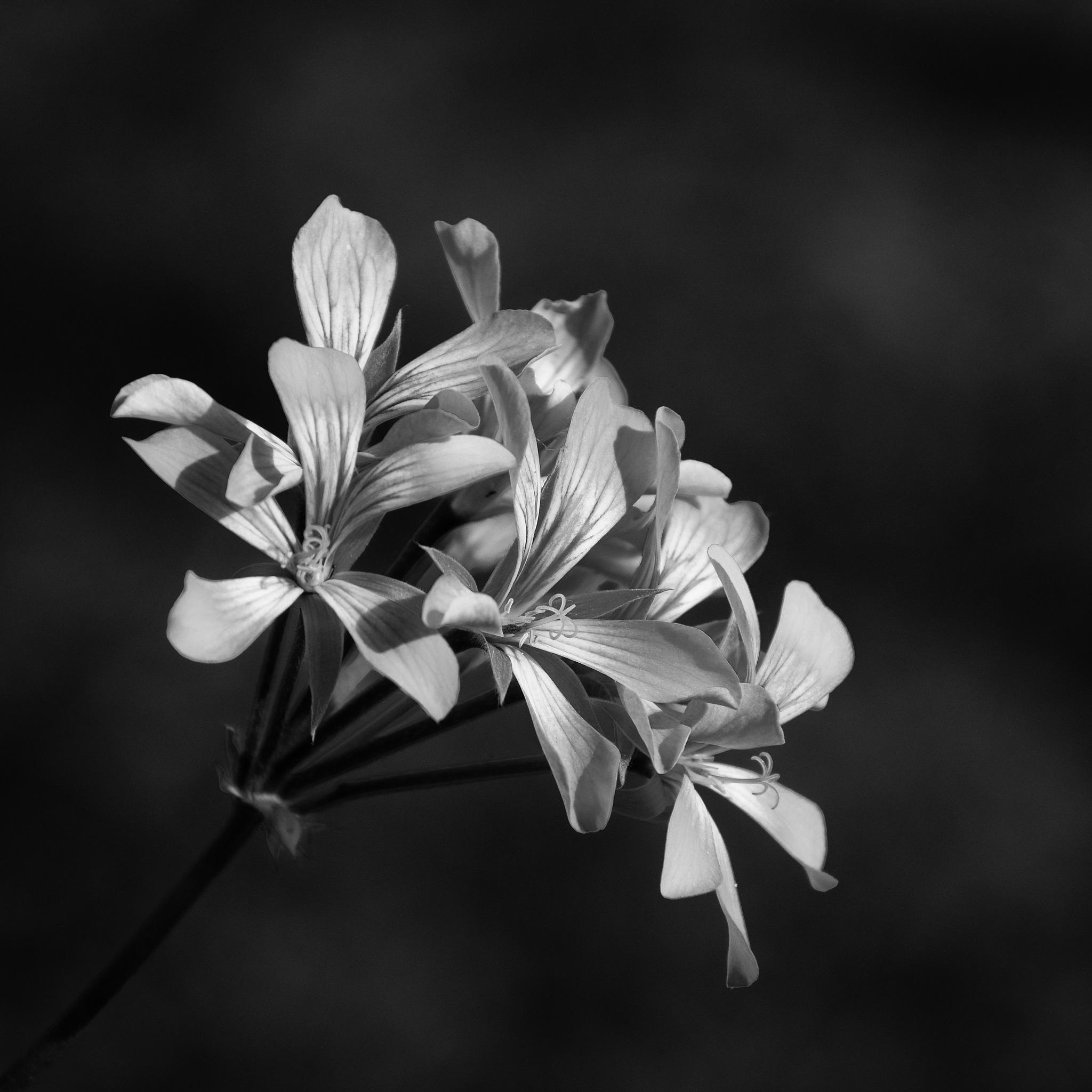 Untitled by Roman Kurkowski