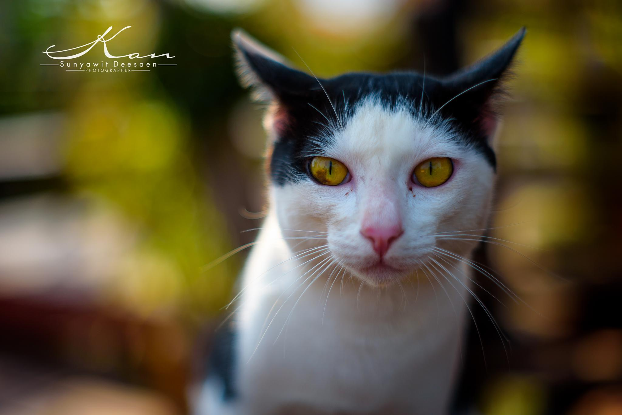 Cat by Sunyawit D.