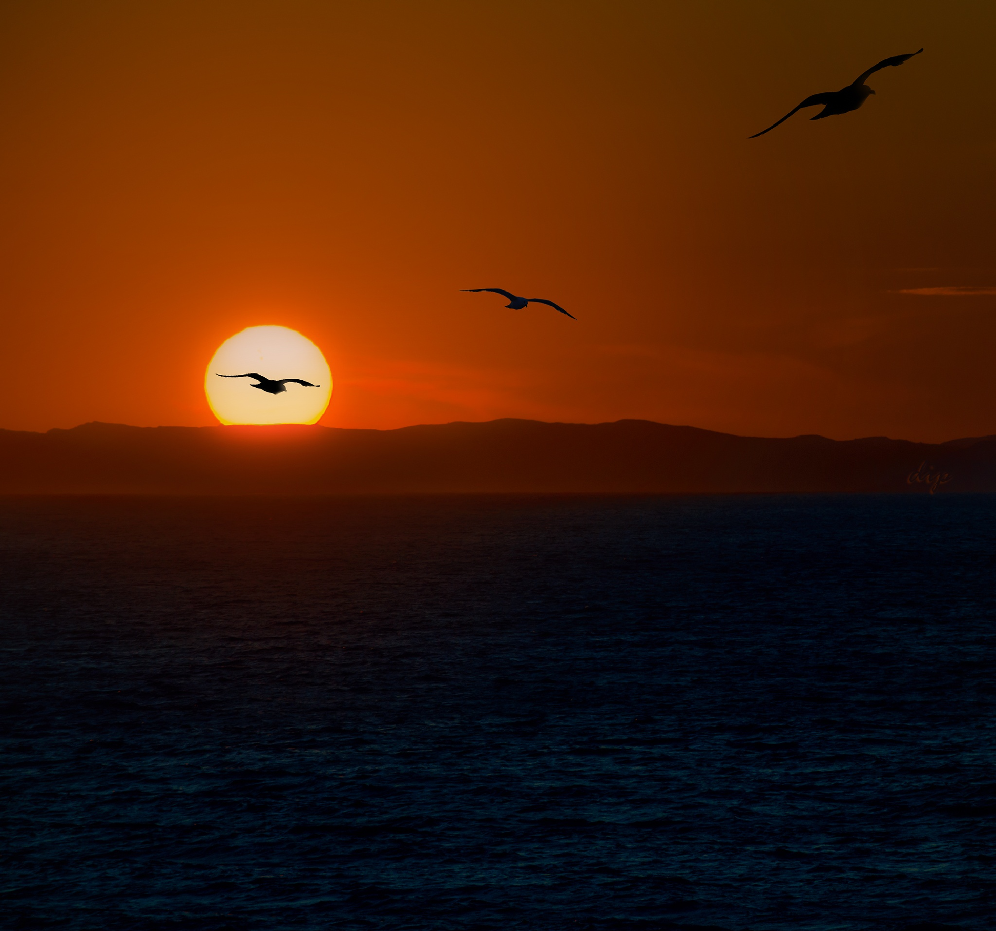 Seagulls at sunset... by dipphotos