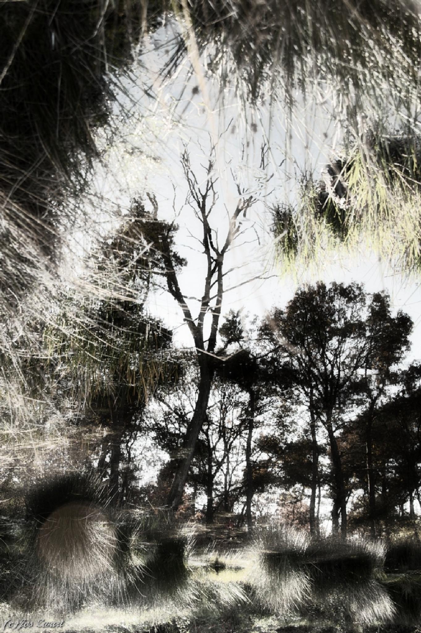 Reflection... by Jos Zwart