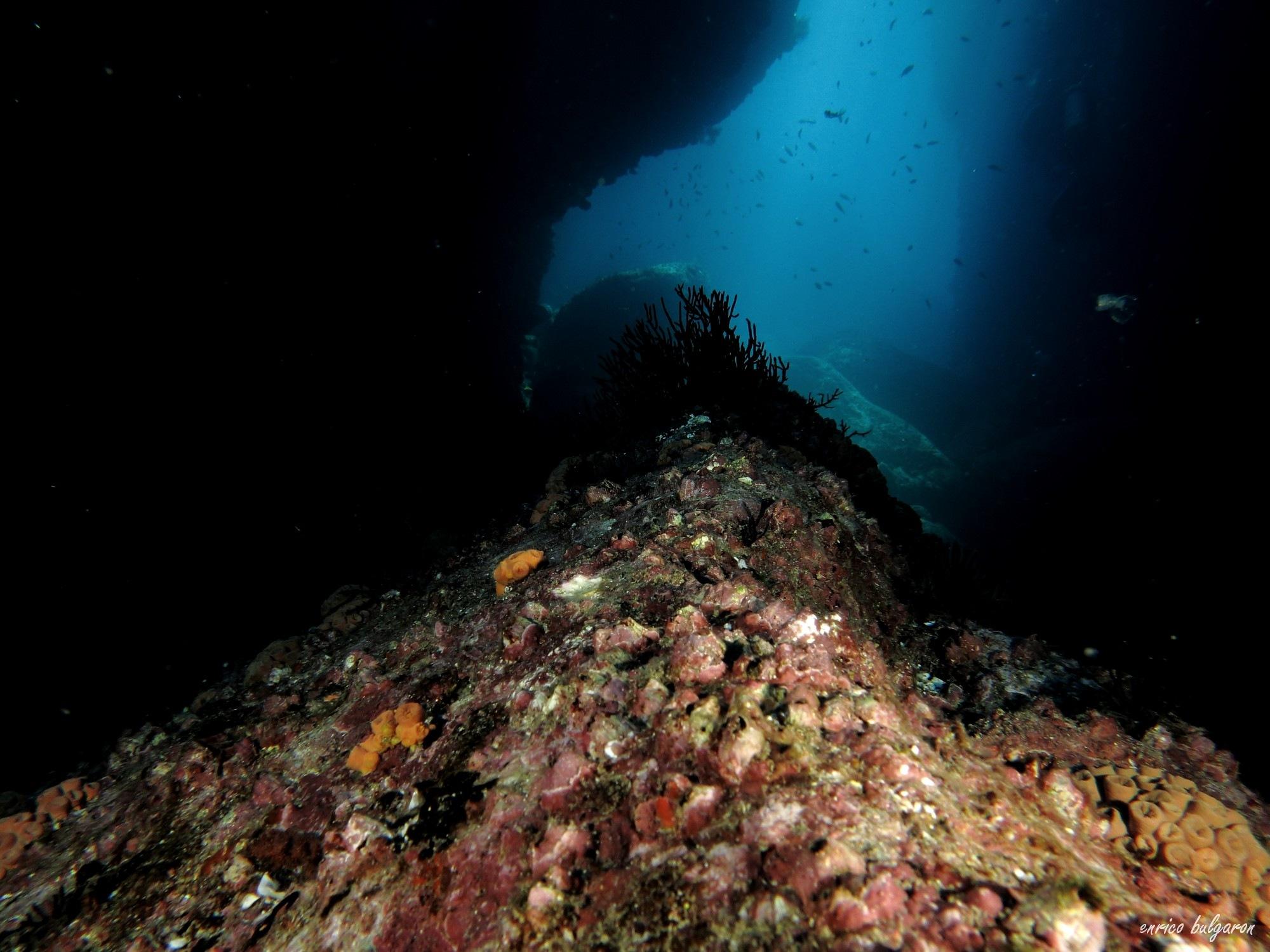 Underwater World by Enrico Bulgaron