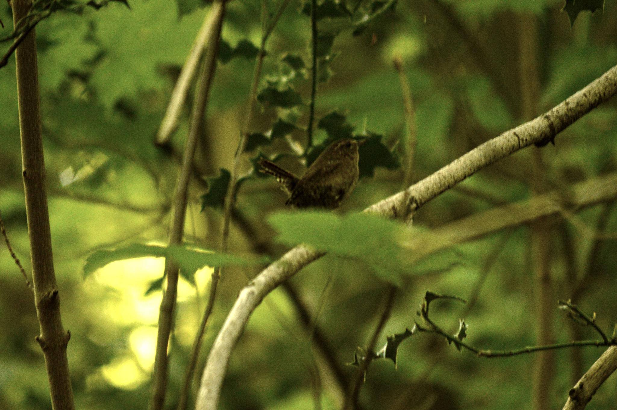 Songbird At Rupert Ravine by David Brian Paley