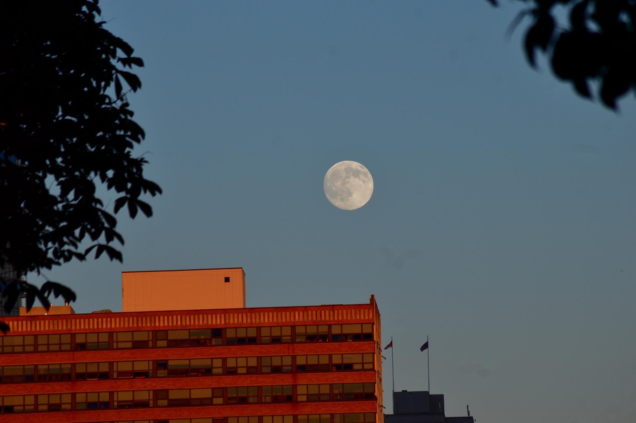Moonshot 2 by David Brian Paley