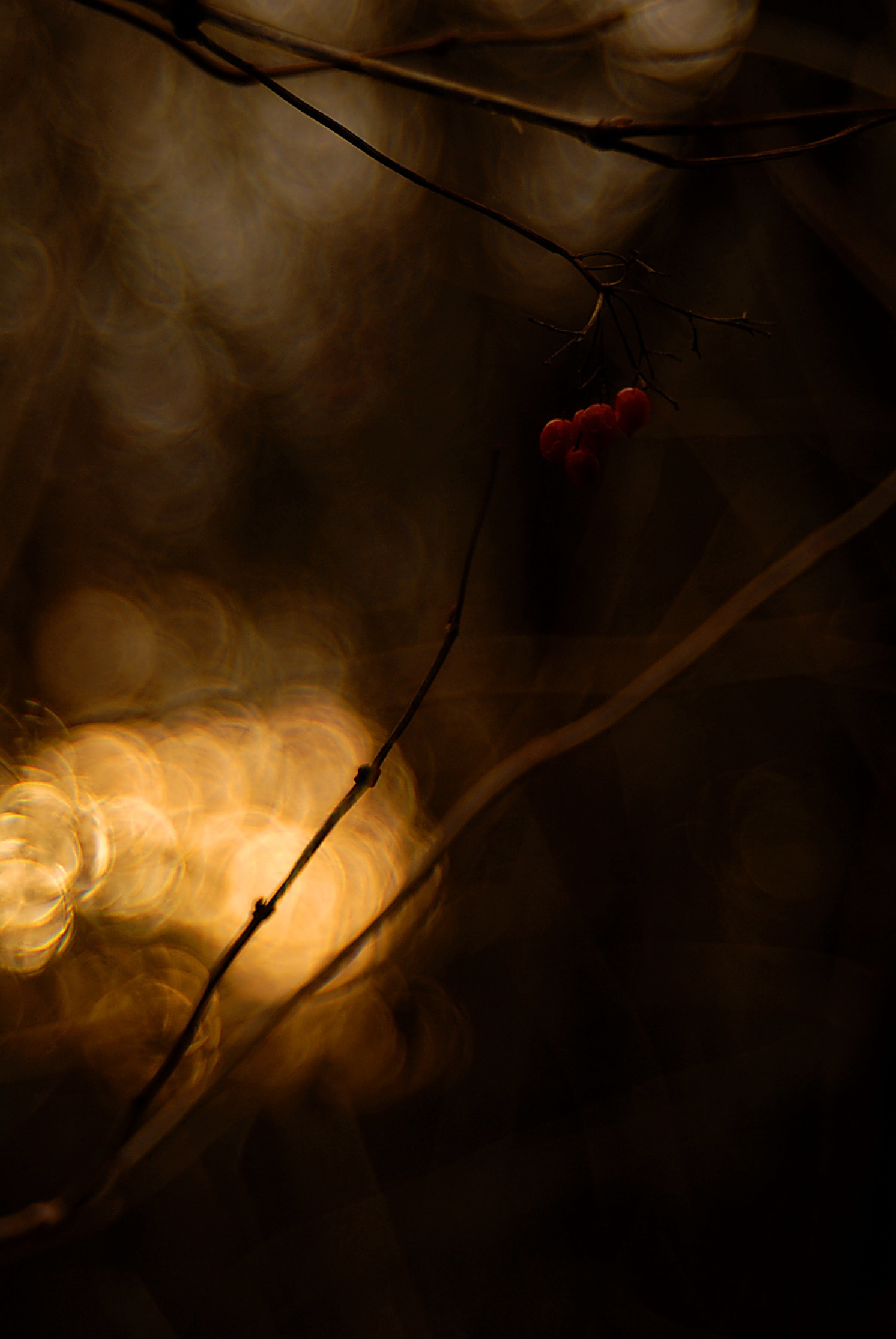 What You Have Seen In The Darkness by RolandPohl