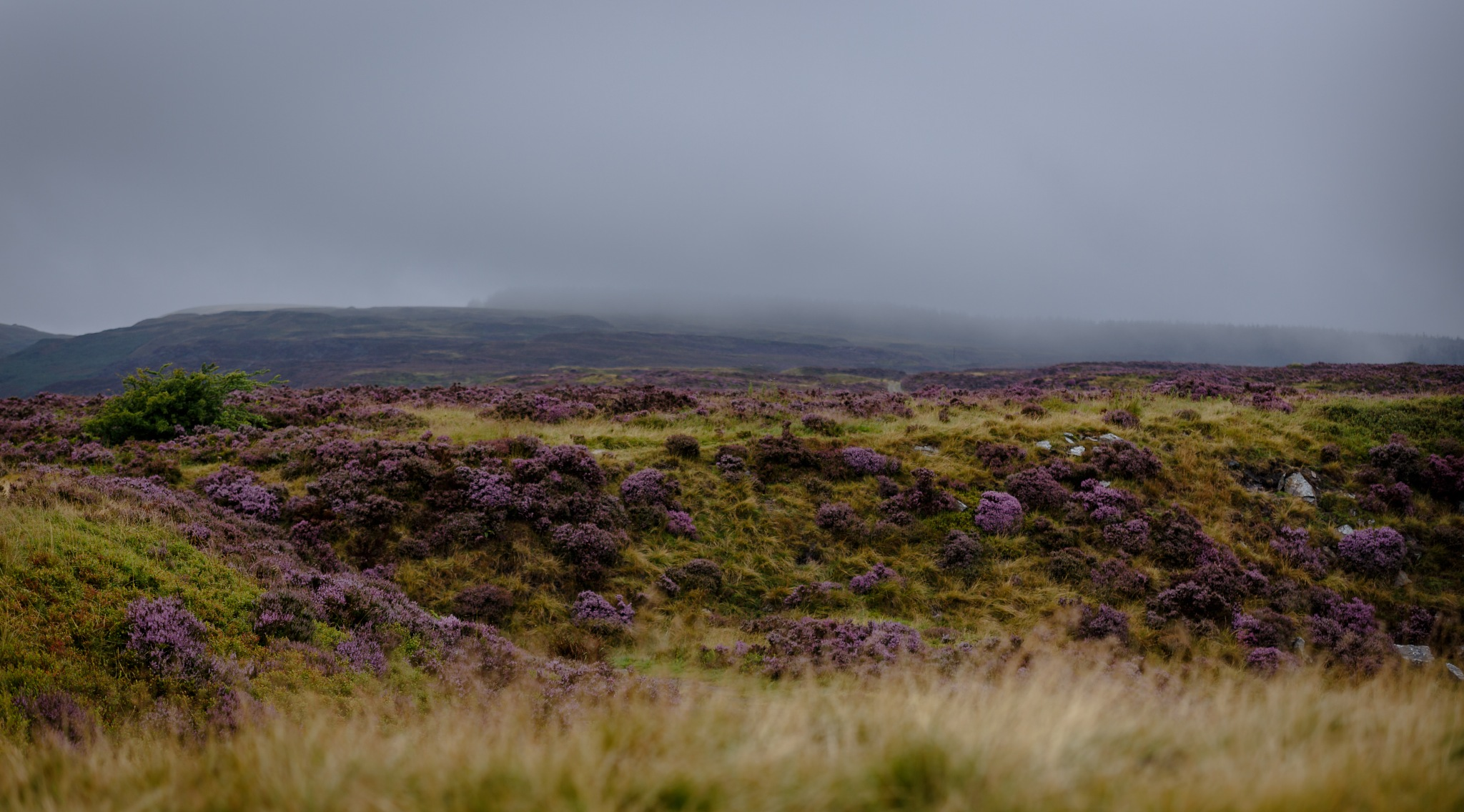 Very wet on the moors and challenging light :) by Gina Rayment