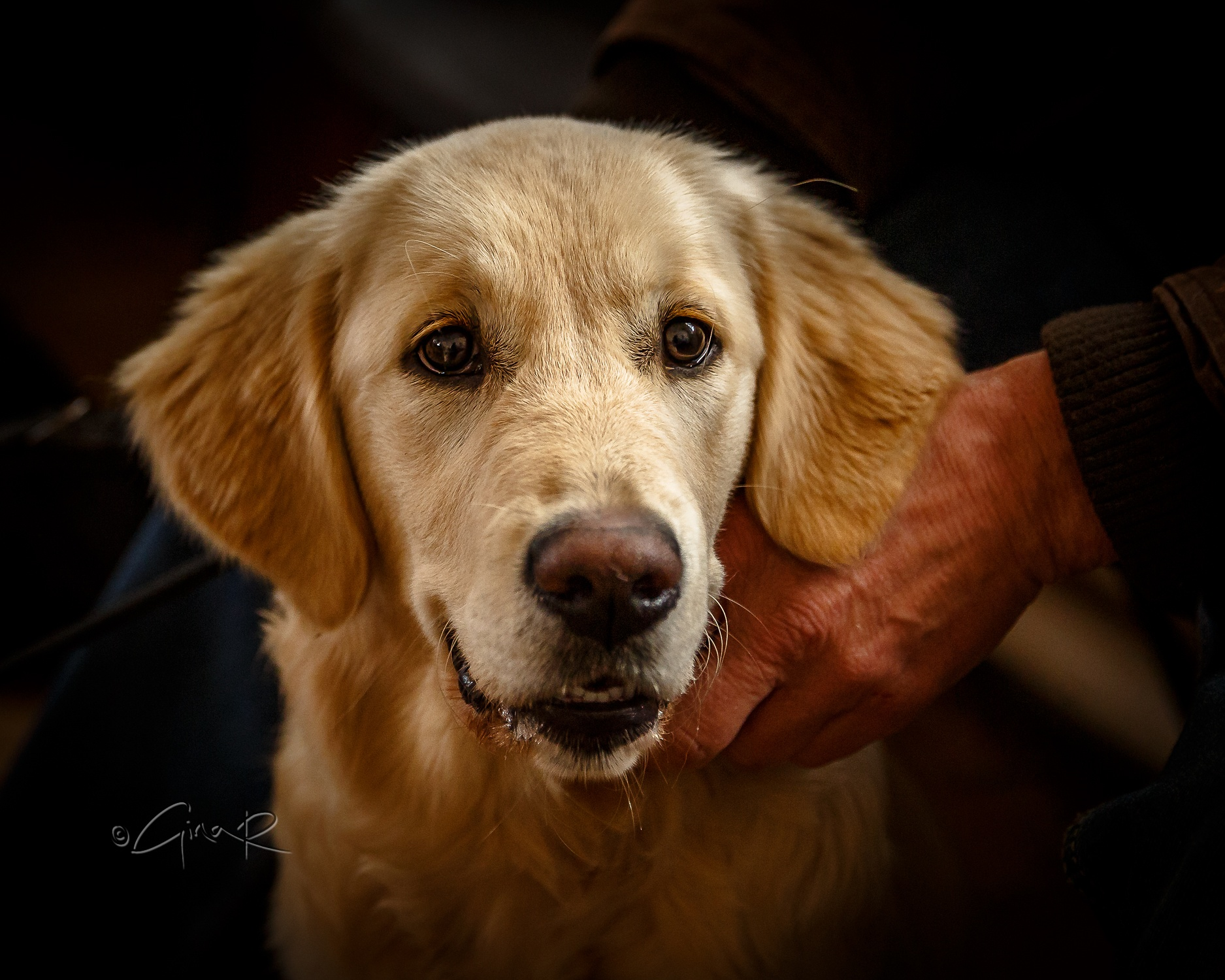 Random pup at a local dog show #gorgeous by Gina Rayment