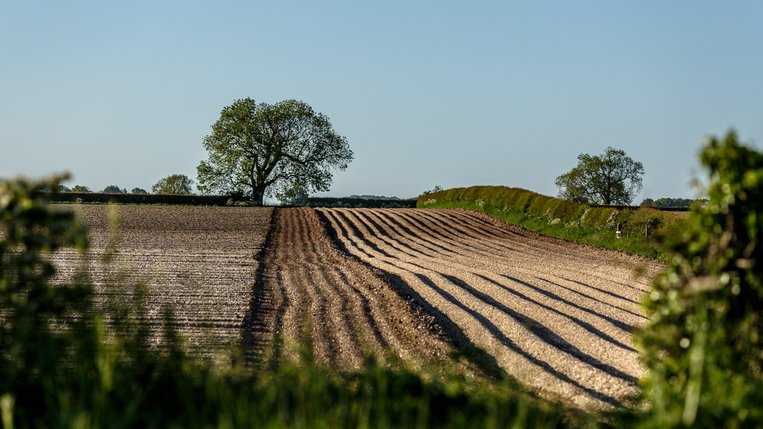A gap in the hedge by Gina Rayment