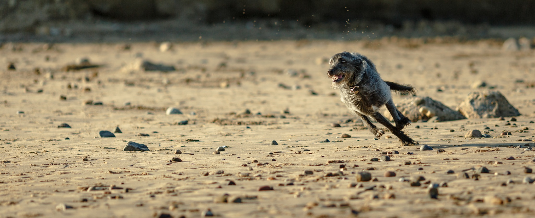 Zoomy Zedd on the beach by Gina Rayment
