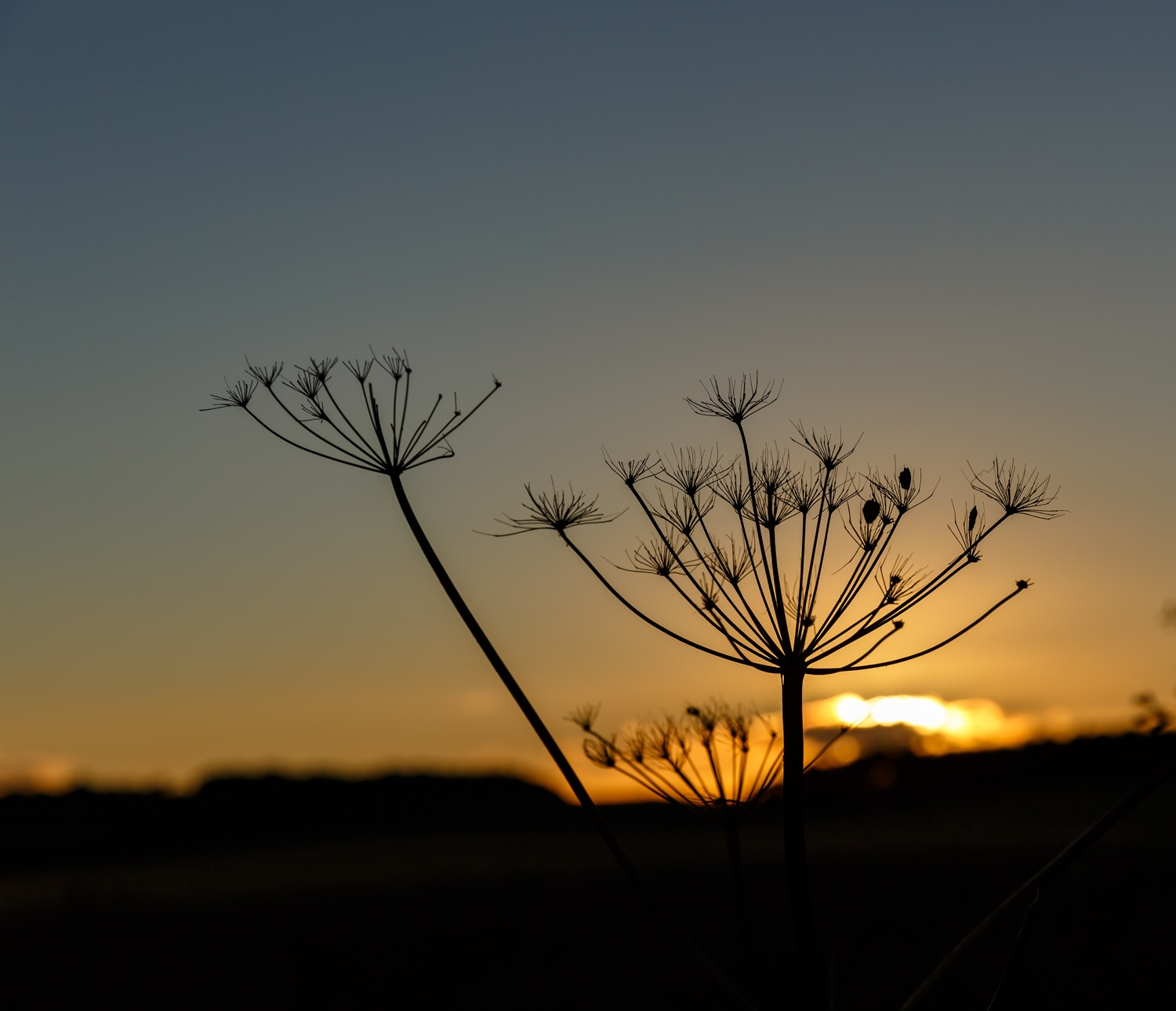 Love watching the sun go down #garton #sunset #nature #landscapephotography #ginar #driffield #easty by Gina Rayment