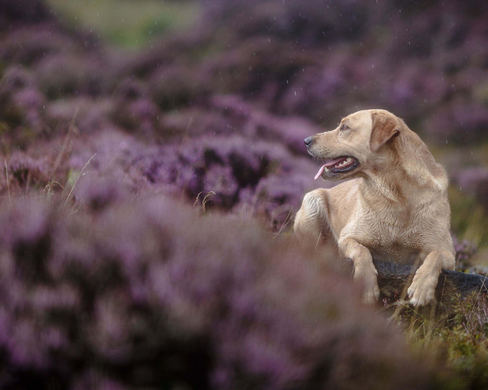 Working gun dogs by Gina Rayment