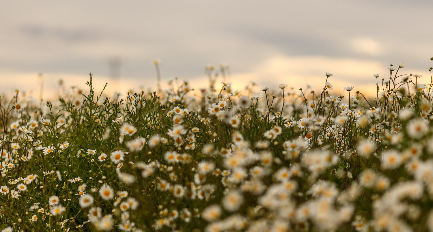 wild flowers by Gina Rayment