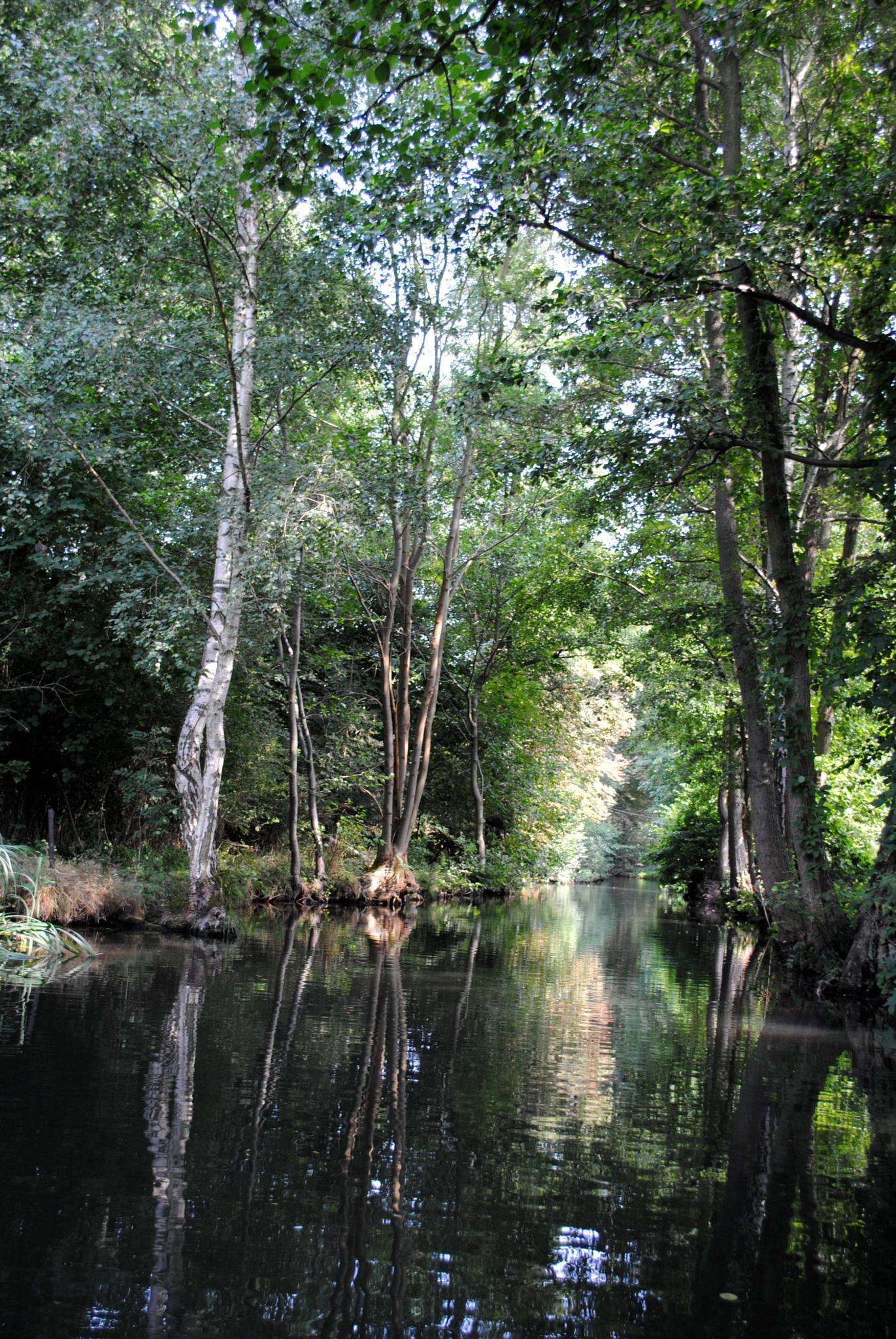 Spreewald, waterways by j.hoppe